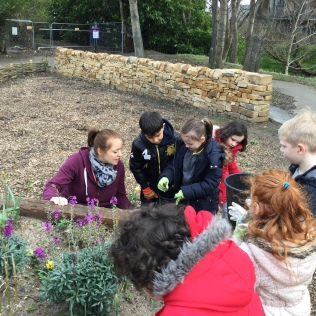 Planting flowers in the Community Garden